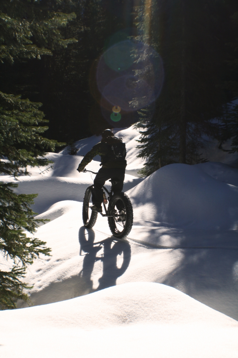A person riding a fat tire bike through trees near Nelson, BC on a sunny day.