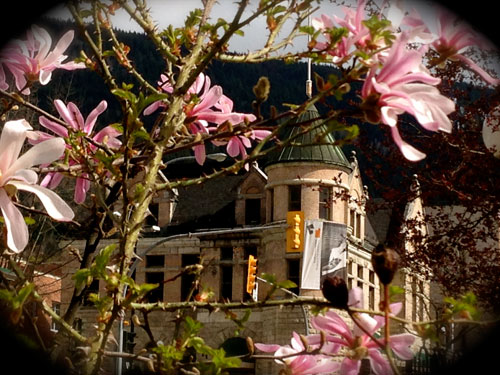 The Touchstones Museum's heritage building in Nelson BC, seen through some blossoming flowers.