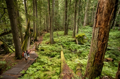 Two hikers on the trail in an old growth forest.