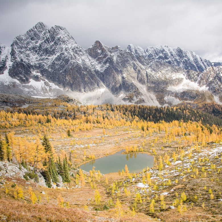 Monica Meadows covered in vibrant yellow large trees with the large Purcell Mountains in the background