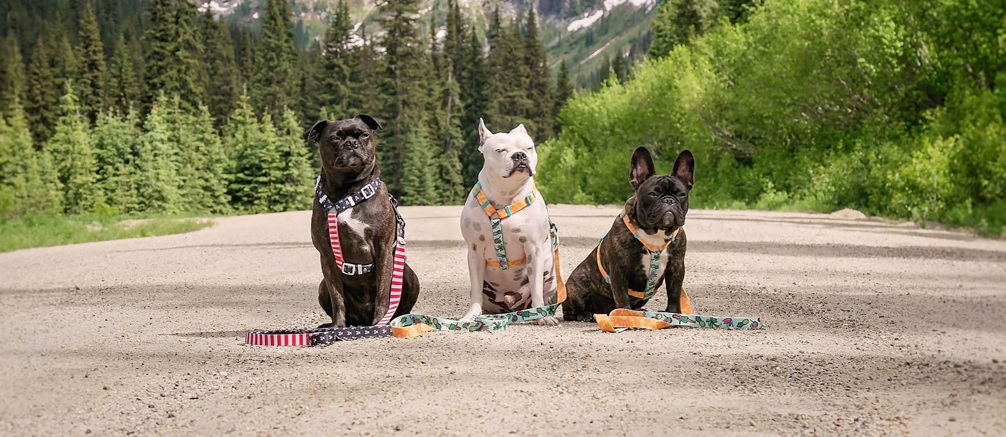 Three dogs wearing brightly coloured harnesses sitting on a dirt road with large mountains in the background.