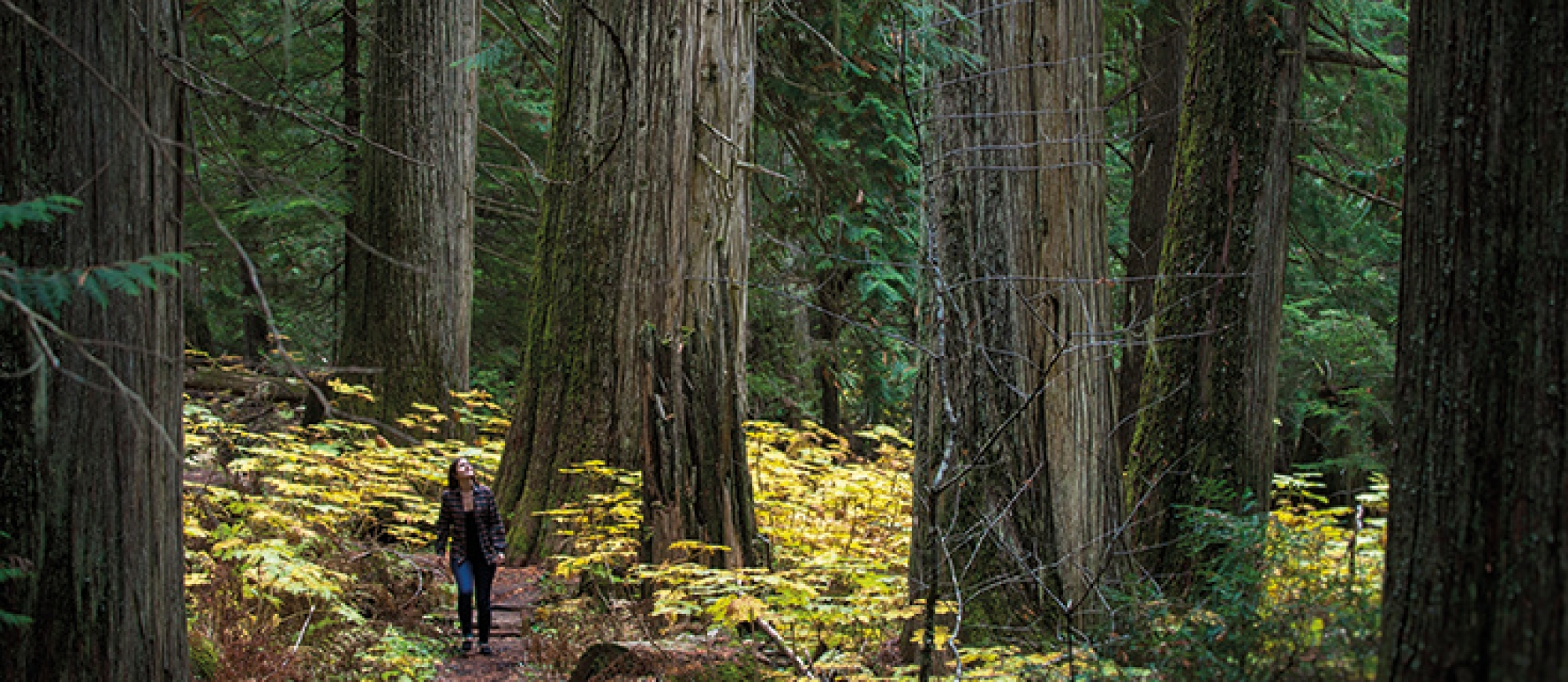A girl walking the Old Growth Trail in Kokanee Glacier Provincial Park