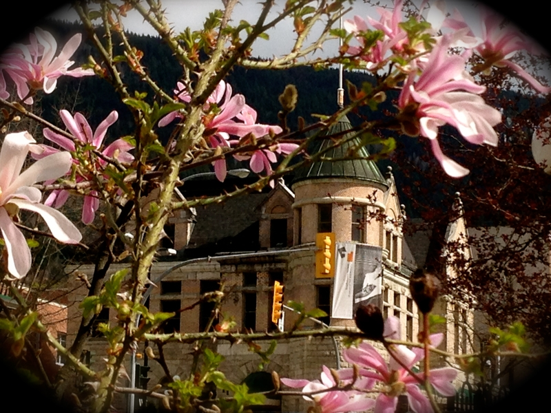 Spring has sprung in front of Touchstones Museum, Nelson, Photographer Maria Schuh
