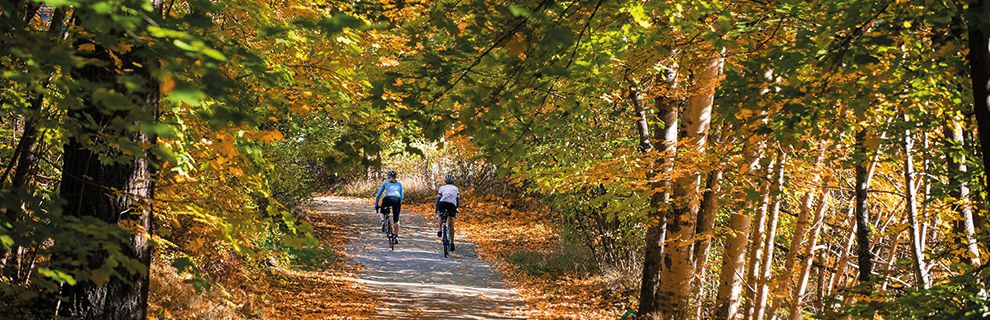 Two cyclists on a back road surrounded by trees.