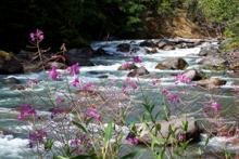 Kaslo River Trail, Kaslo BC