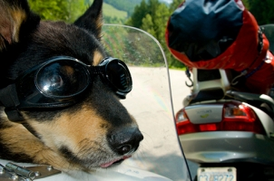 A dog in a motorcycle cart earing goggles